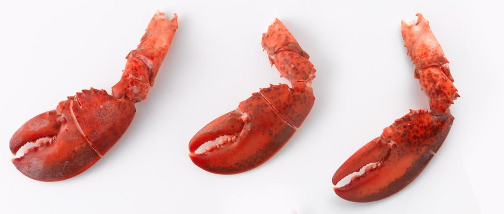 Detail_lobster_clawarm