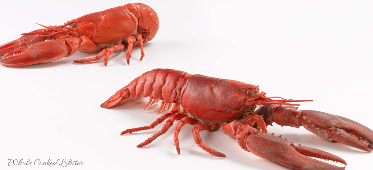 About Us Slider lobster